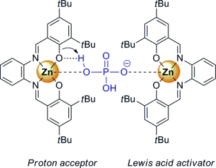 Dimetallic activation of dihydrogen phosphate by Zn(salphen) chromophores