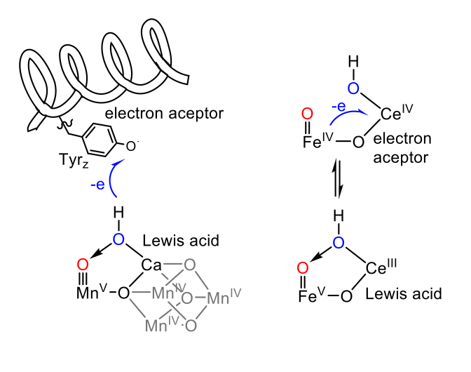 Fig. 2 – Parallels between the OEC and the iron–cerium complex.