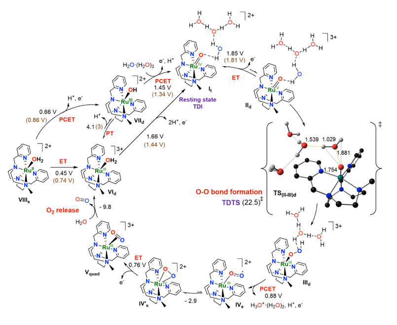 Fig. 3. Proposed WO catalytic cycle for complex [RuII(OH2)(Py2Metacn)](PF6)2 (RuII-OH2) based on experimental and computational data.