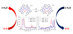 Raman resonance spectra of the peroxido and superoxido cobalt complexes.