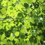 leaf-884217_960_720