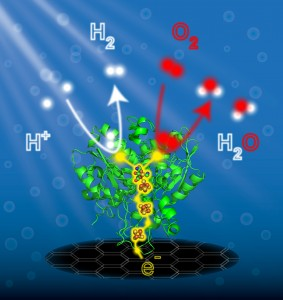 FeFeHydrogenase E-Chem