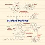Synthesis Workshop